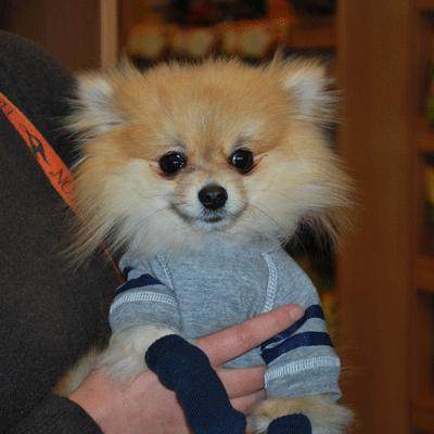 Friends Carousal - Pet Stores in Windsor Ontario