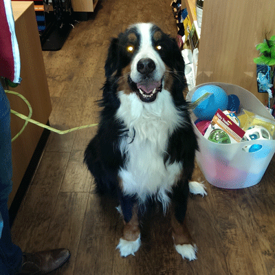 dog toys pet supply