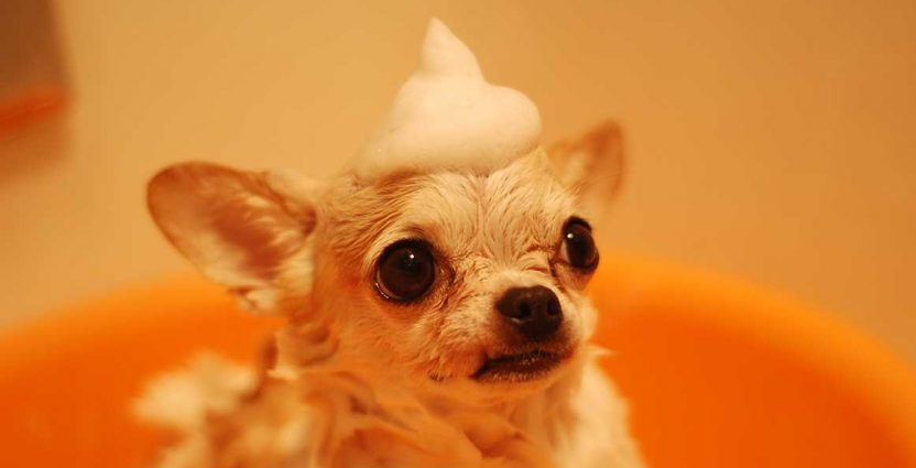 Pet Grooming Tips and Tools