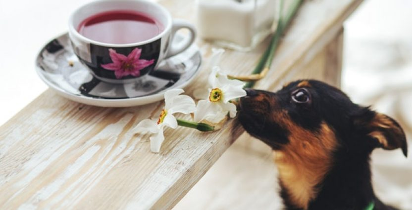 Does My Pooch Need Food Supplements?